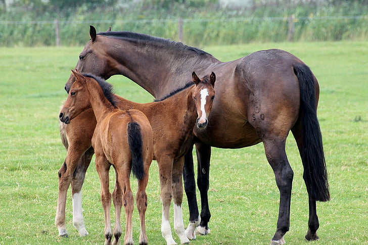 Pasture Management For Horses - How To Keep Your Grass Healthy!