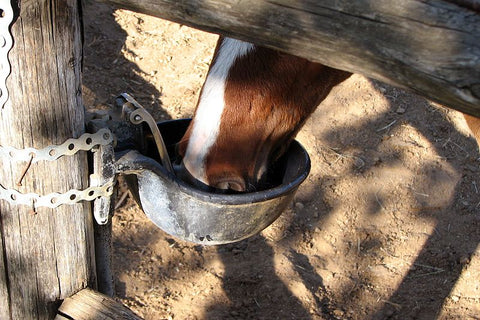 Australian Summer Horse Care Tips
