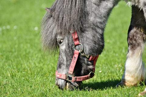 Dealing With Horse That Is A Picky Eater - Unravelling Equine Fussy Eating Habits