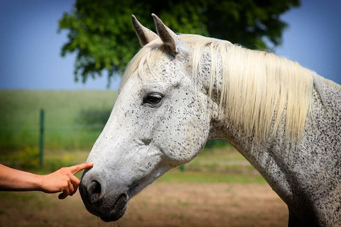 Equestrian Massage Therapy What You Need to Know
