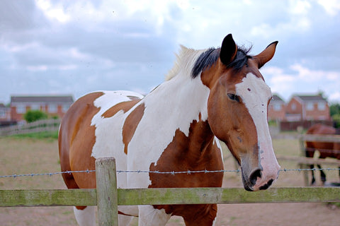 Caring For Summer Sores On Horses In Australia