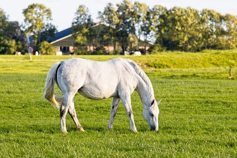 pasture management for horses