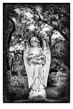 "Black and white angel image titled, ""Into the Woods"""