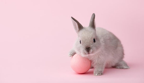 Cruelty-Free: The Truth Behind Animal Testing and Why it Matters