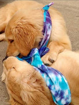 Cool Dog Bandanas