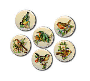 "Vintage Bird Illustrations Set of Six 1"" Magnets."
