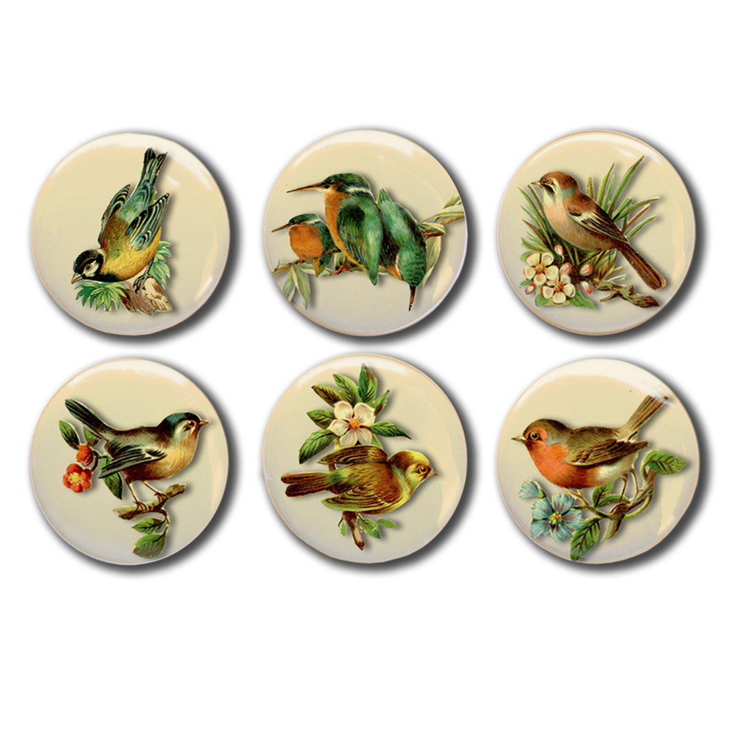 Vintage Bird Illustrations Set of Six 1