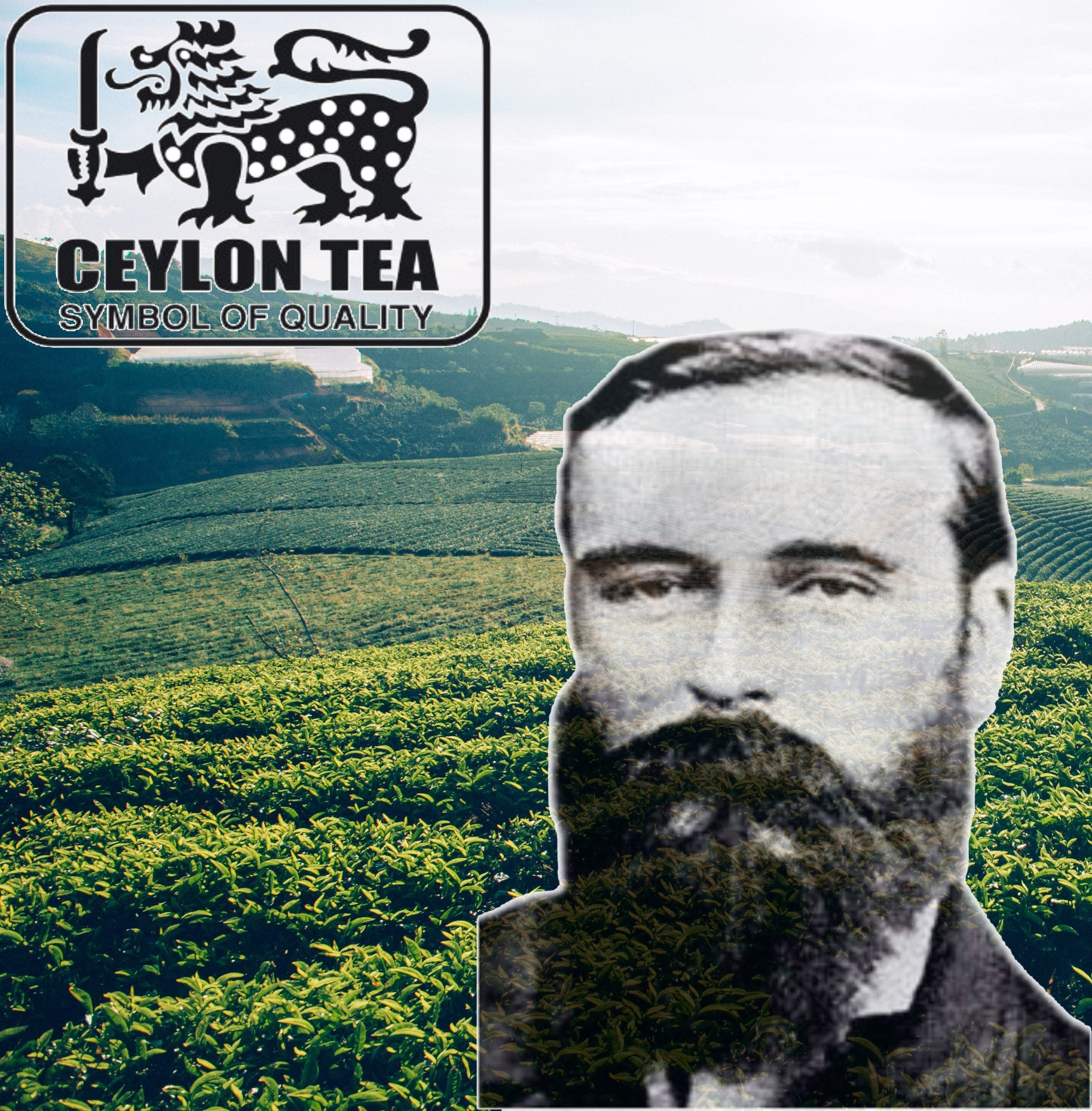 The Father of Sri Lankan Tea