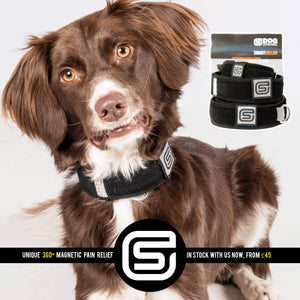 DOG STREAMZ SMART-COLLARS