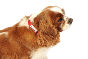 Doodlebone Bold Dog Collar