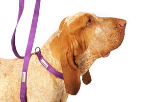 Doodlebone Bold Dog Lead