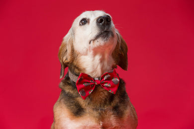 SALE- Festive Party Animal Bow Tie