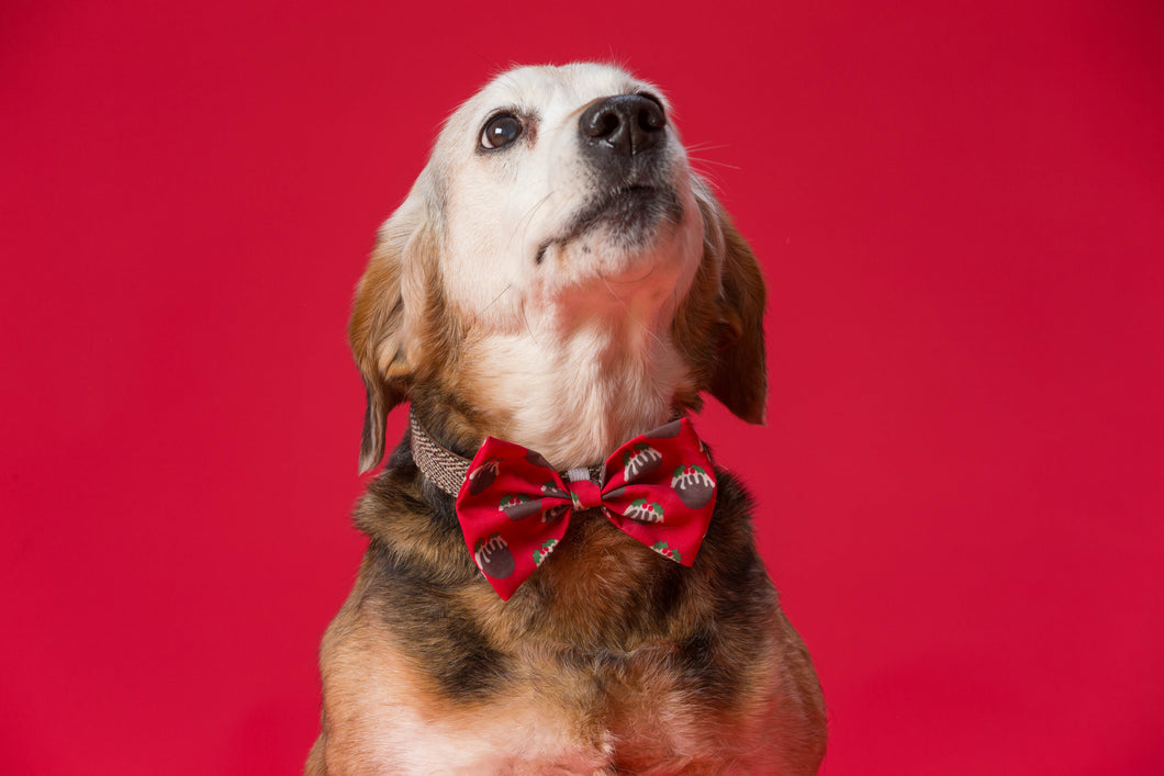 Festive Party Animal Bow Tie