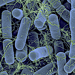 What Are Microbes and Do You Need Them in Your Garden?