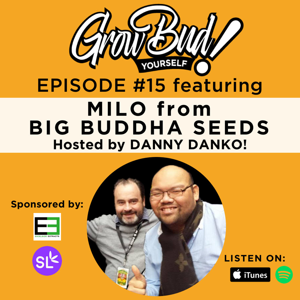 Milo Yung from Big Buddha Seeds talks with Danny Danko!