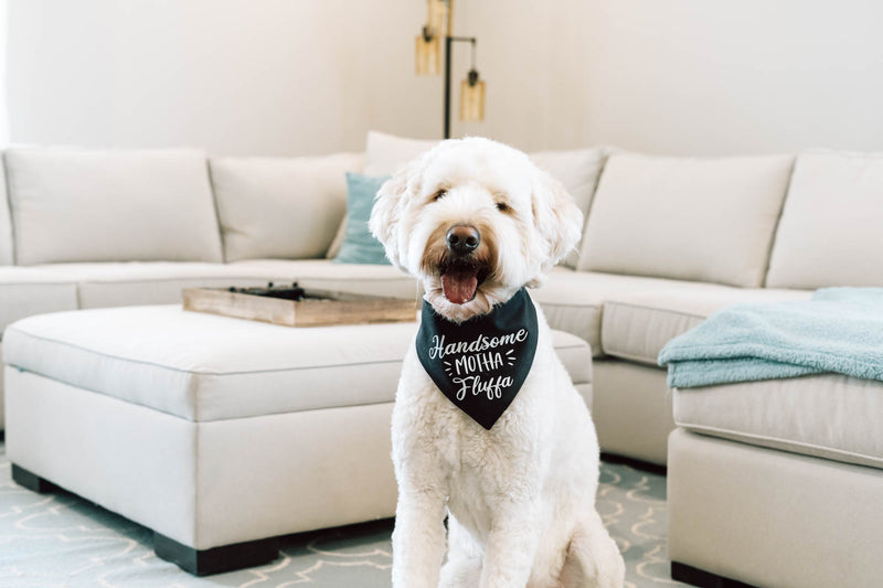 Grooming Tips Every Doodle Owner Should Know