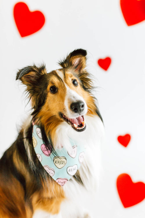 Conversation Hearts Bandana