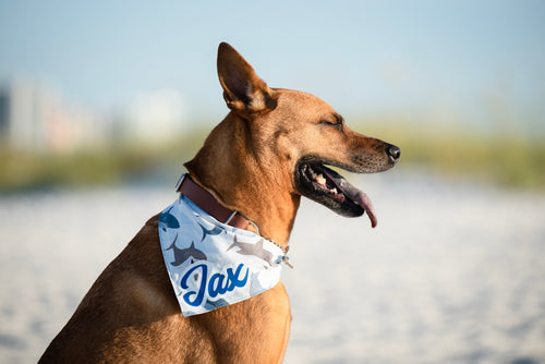 Jawsome Sharks Dog Bandana