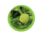 Natural Ingedients Icon