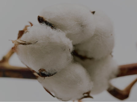 organic cotton fibres