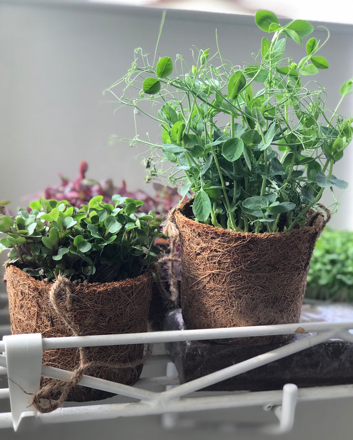 Going Green With Biodegradable Coir Planting Pots