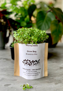 Growing Microgreens Just Got Easier With Our Grow Bags