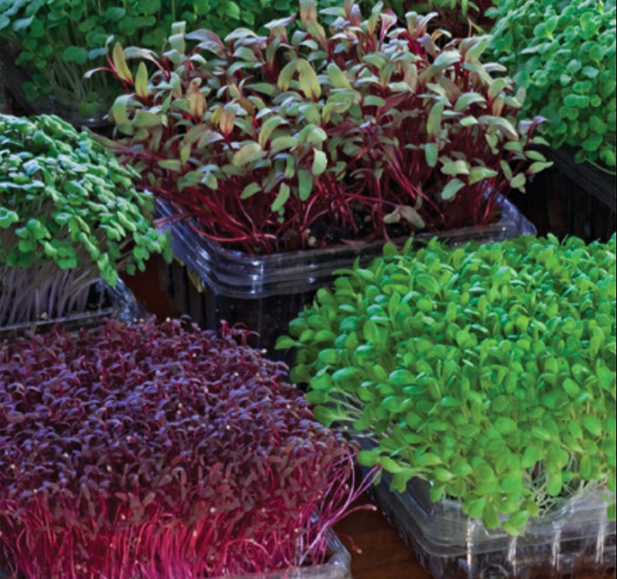 Reuse Your Plastic Containers To Grow Microgreens