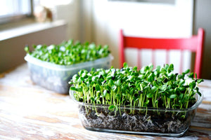 How To Grow Microgreens In Singapore
