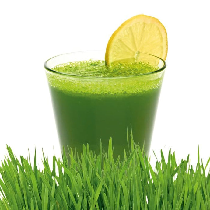Grow Wheatgrass Easily And Enjoy The Nutritional Benefits