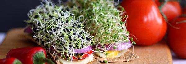 how to sprout seeds, singapore, everything green sprout seeds, sprouting method