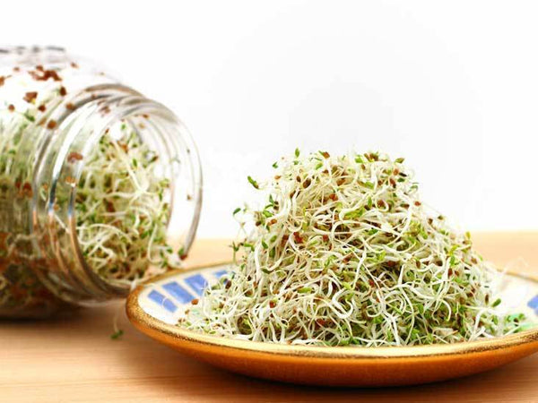 alfalfa sprouts, singapore, buy, seeds, grow, sprout, how to, everything green, organic, non gmo
