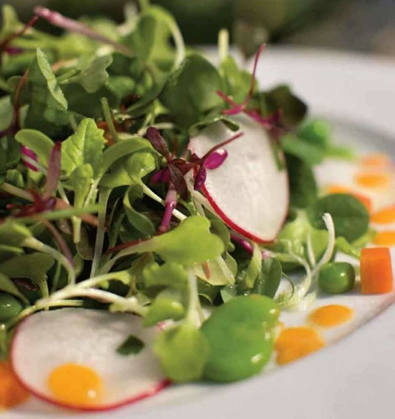 microgreen salad recipe