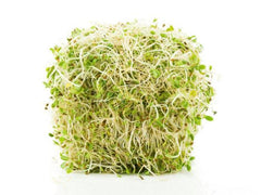 how to sprout, organic microgreen seeds, can i sprout seeds, how to grow microgreens