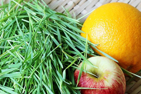 wheatgrass juice recipe, what to do with wheatgrass, how to make juice from wheatgrass,