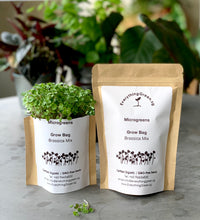 earth day gift, sustainable door gifts, microgreens, Singapore, buy, online, vegetable seeds, organic, gmo free, starter kit, grow microgreens, edible, brassica seeds, everything green, radish seeds, broccoli seeds, kale seeds, mustard seeds,