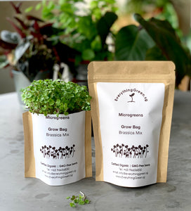 earth day gift, sustainable door gifts, microgreens, Singapore, buy, online, vegetable seeds, organic, gmo free, starter kit, grow microgreens, edible, brassica seeds, everything green, radish seeds, broccoli seeds, kale seeds, mustard seeds, indoor gardening kit singapore