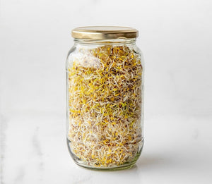 alfalfa sprouts, singapore, buy seeds for sprouting, organic, sprout seeds