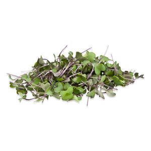 turning, kohlrabi, microgreens, sprouts, singapore, buy, organic vegetable seeds, non treated vegetable seeds