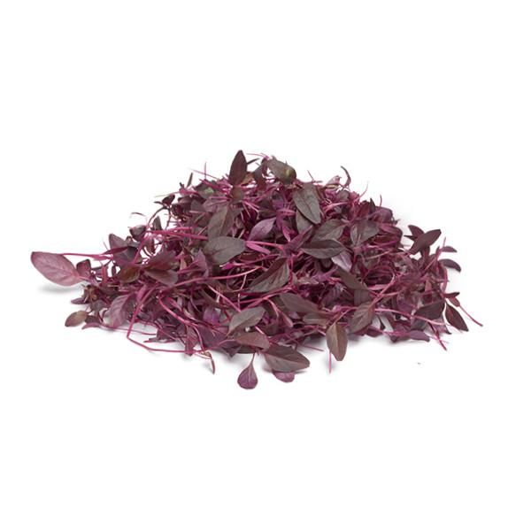 Buy amaranth microgreen seeds online. Free Shipping in Singapore