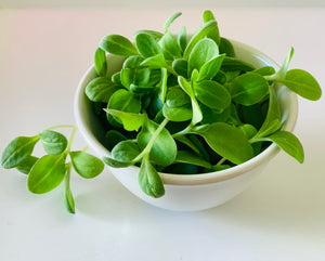 Borage Microgreen Seeds (Cucumber flavour!) NEW!