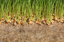 how to grow microgreens without soil, how to grow a plant without soil, coconut mats for germinating seeds,