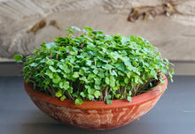 Deluxe Microgreens Starter Kit - The Perfect Gift For The Gardening Enthusiast