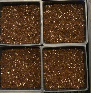 Kohl Rabi Microgreen Seeds Pack