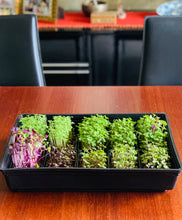 microgreens tray set, tray for growing microgreens, singapore,