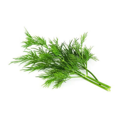 buy dill seeds singapore, where to buy, how to grow dill from seeds, how to grow dill, tropical climate, dill seedlings