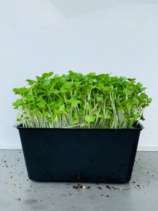Asian Salad Mix Microgreens Seed Pack - Good For Multiple Sowings