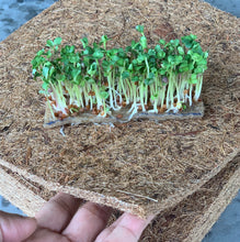 grow microgreens hydroponically, hemp mats, singapore, everything green, vegetables hydroponics,