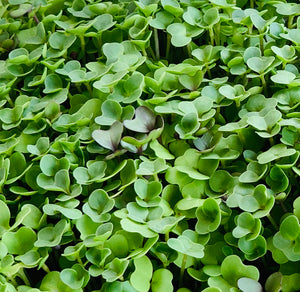 microgreens mild mix, mild mix microgreen seeds, microgreen mix seed variety, rainbow mix, Asian salad mix, microgreen salad mix