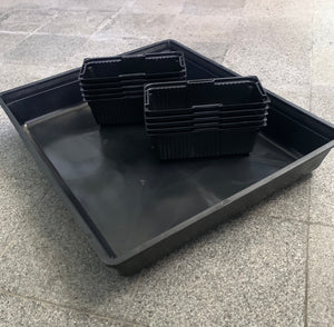 microgreens germination tray, 10 x 20 flat tray, singapore, buy online, free shipping, tray for growing microgreen, microgreen punnets, punnet,