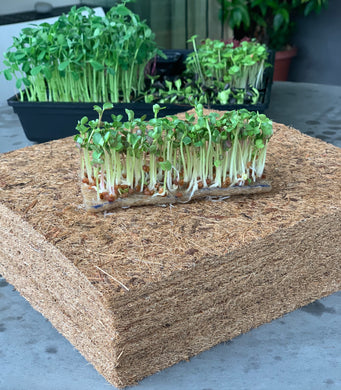 coco mat for microgreens, sprouts, wheatgrass, coconut fiber mat, singapore, everythinggreen, wholesale coco mat